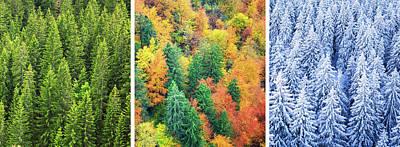 Four Season Forest Art Print by Borchee