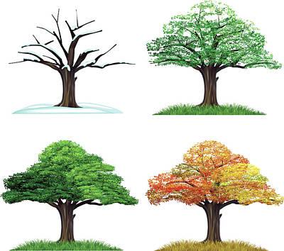 Four Season Tree Art Print by Sceka
