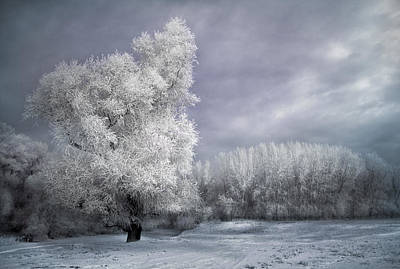 Photograph - Four Seasons - Winter by Akos Kozari