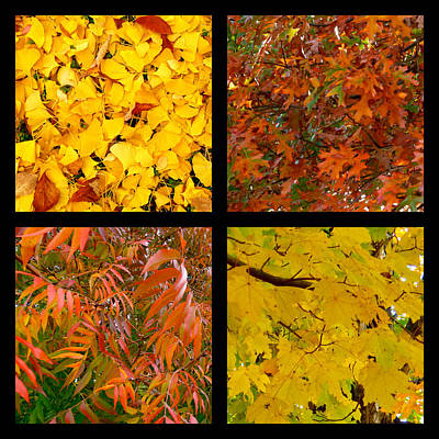 Photograph - Four-square Autumn Leaves by Jean Wright