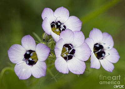 Photograph - Four Tiny Beauties by Wanda Krack