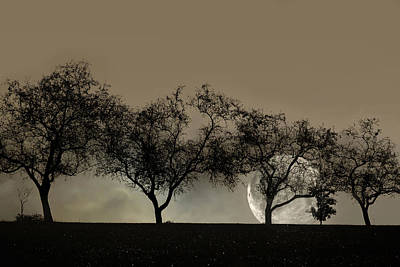 Moonlit Night Photograph - Four Trees And A Moon by Ann Bridges