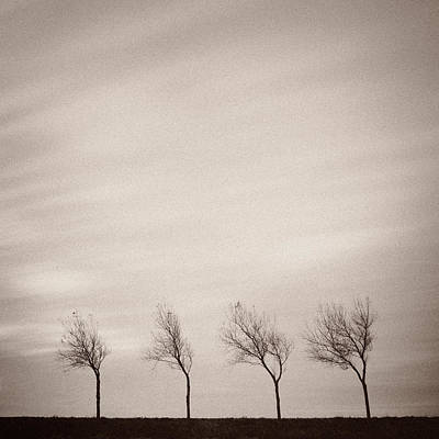 Winter Netherlands Photograph - Four Trees by Dave Bowman