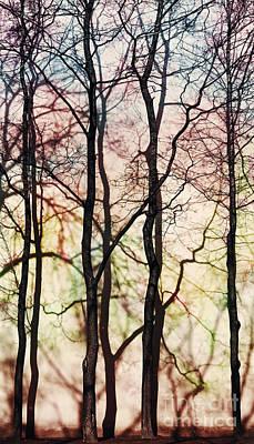 Four Trees Art Print by Elena Lir-Rachkovskaya