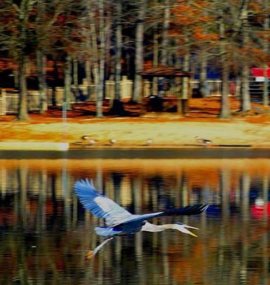 Fowl In Flight Art Print