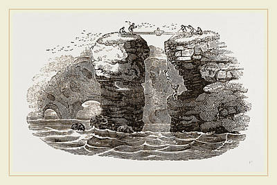 St.kilda Drawing - Fowlers Of St Kilda by Litz Collection