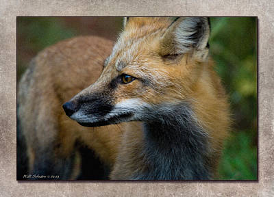 Photograph - Fox 1 by WB Johnston
