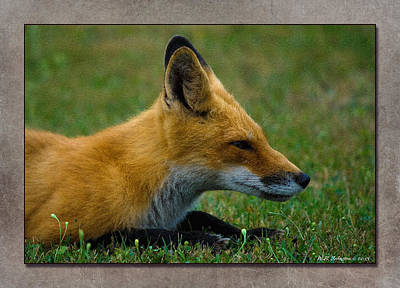 Photograph - Fox 2 by WB Johnston
