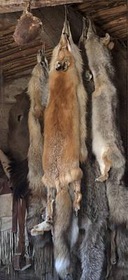 Rabbit Hunting Photograph - Fox Among Friends by David Kehrli