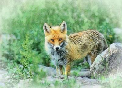 Fox In The Rocks Art Print by Czesznak Zsolt