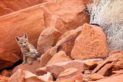 Photograph - Fox Kitts by David Beebe