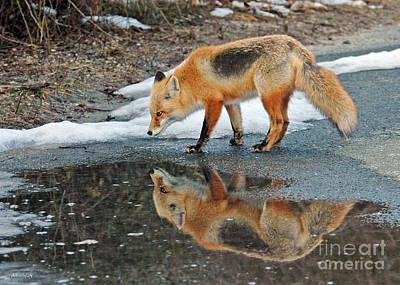 Photograph - Fox Reflection by Sami Martin