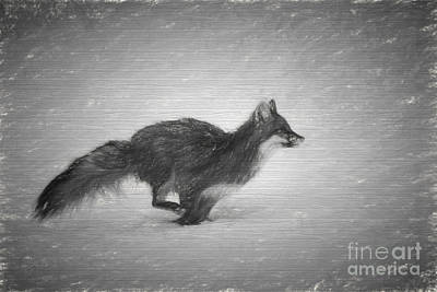 Photograph - Fox Running.....paintography by Dan Friend