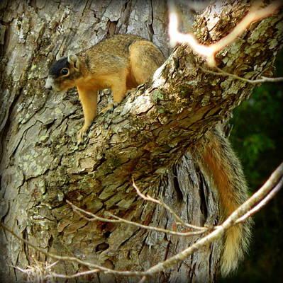 Fox Squirrel IIi Art Print by Lynn Griffin