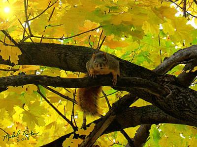 Fox Squirrel  Original by Michael Rucker