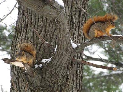 Fox Squirrels Perched  Original by Dennis Pintoski