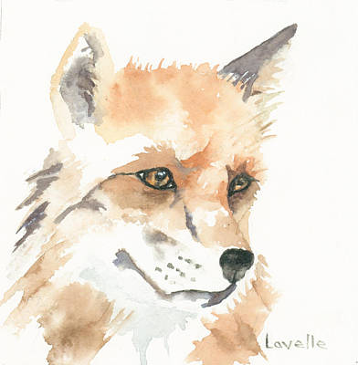 Fox Kit Painting - Fox Study 1 by Kimberly Lavelle