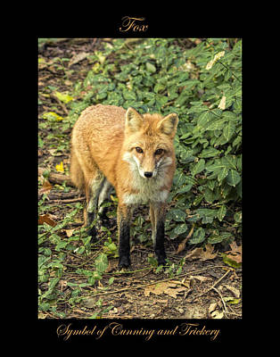 Photograph - Fox Symbol Of by Marty Maynard