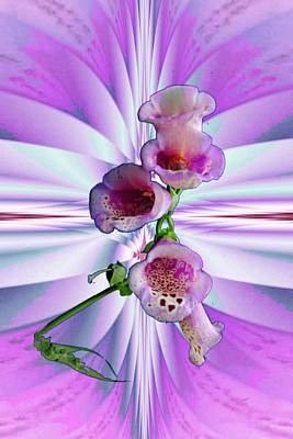 Photograph - Foxglove by Mike Breau