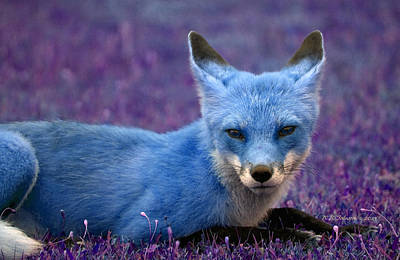 Photograph - Foxy Lady's Got The Blues by WB Johnston