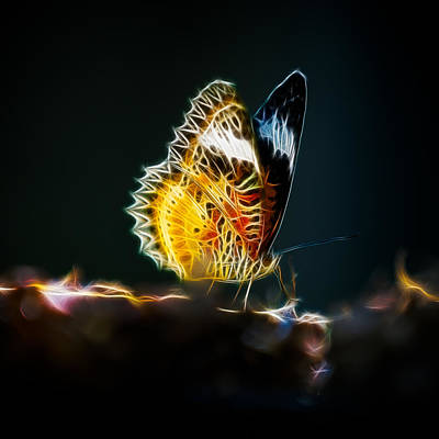 Photograph - Fractal Butterfly by Brad Grove