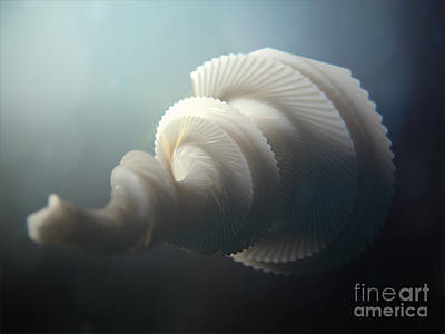 Weird Painting - Fractal Seashell  by Pixel  Chimp