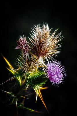 Photograph - Fractal Thistle by Brad Grove