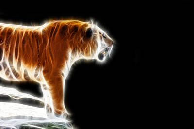 Fractal Tiger Art Print by Pati Photography