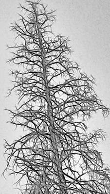Fractal Tree Abstract Art Print by Steve Ohlsen