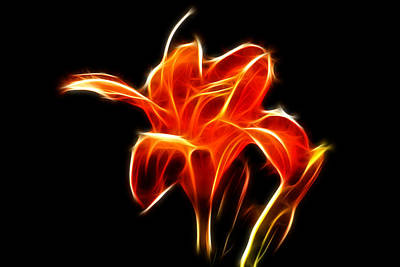 - Fractaled Lily by Bill Barber