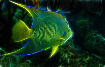Photograph - Fractalized Angelfish by Bill Barber
