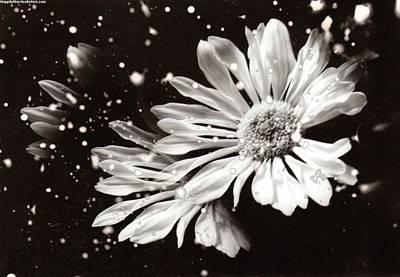 Fractured Daisy Art Print