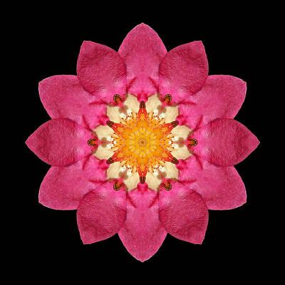 Print featuring the photograph Fragaria Flower Mandala by David J Bookbinder