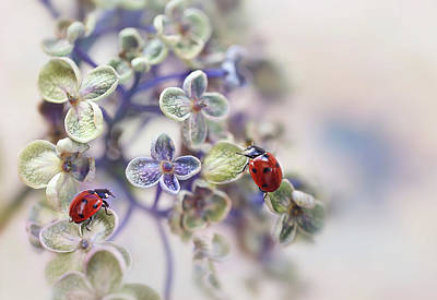 Ladybug Wall Art - Photograph - Fragile by Ellen Van Deelen