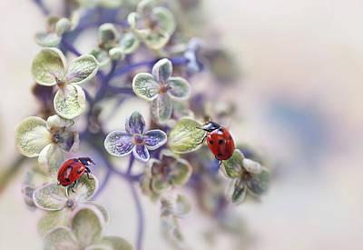 Ladybug Photograph - Fragile by Ellen Van Deelen
