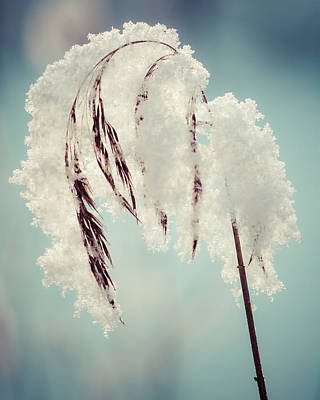 Photograph - Fragile Winter Day by Ari Salmela