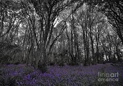 Fragments Of Color Bluebells Print by Julian  Walters