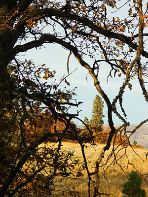 Photograph - Framed In Nature by Jacqueline  DiAnne Wasson