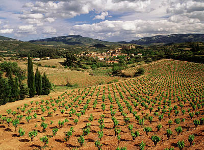 Pastoral Vineyard Photograph - France, Darban-corbieres, Aude by David Barnes