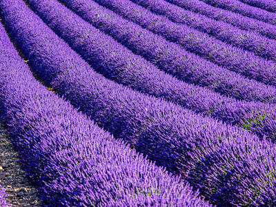 Provence Photograph - France, Provence, Lavender Field by Terry Eggers
