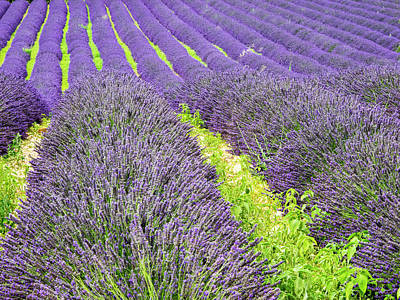 Provence Photograph - France, Provence, Patterns by Terry Eggers