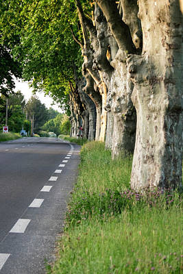 Provence Photograph - France, St Remy, Rural Road by Emily Wilson