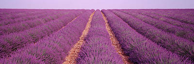 In A Row Photograph - France, View Of Rows Of Blossoms by Panoramic Images