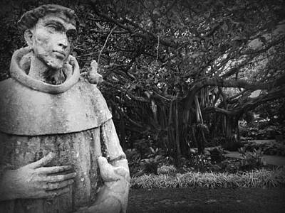 Photograph - Francis Of Assisi Patron Saint Of Birds By The Cypress Tree by Kelly Hazel