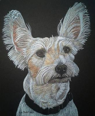 Drawing - Frankie - White Terrier Mix Commission by Anita Putman