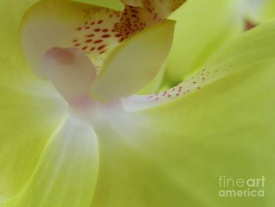 Photograph - Franks Orchid by Diane Miller