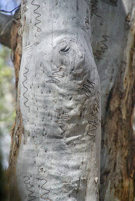 Lady Bug - Fraser Island Landscape by Carol Ailles