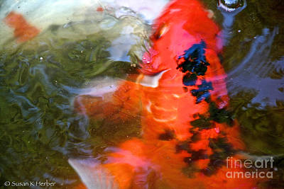Photograph - Freckled Koi by Susan Herber