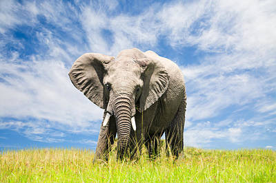 Free African Elephant Art Print by 1001slide