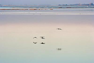 Natuur Photograph - Free As A Bird by Daan  Overkleeft